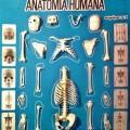 anatomia humana k2