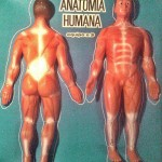 anatomia humana k4
